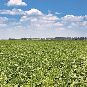 Bilan CO2 des biocarburants : des chercheurs réévaluent l'impact de l'affectation des terres agricoles
